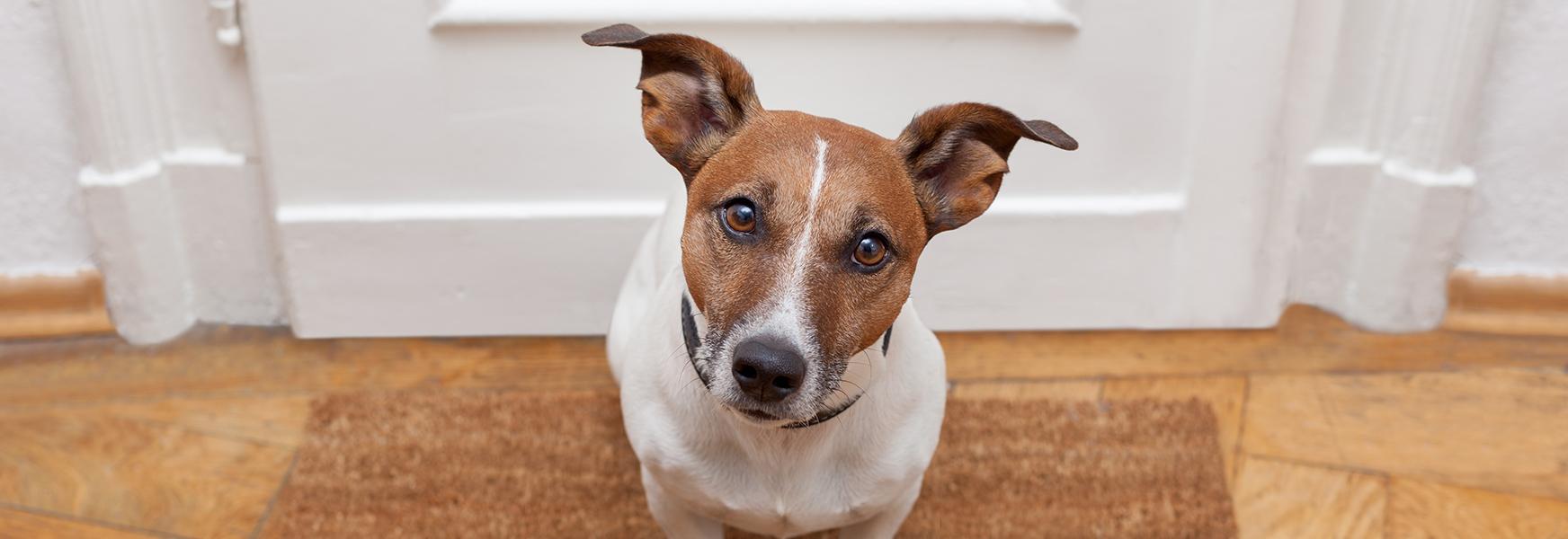 Dog sitting by doorway