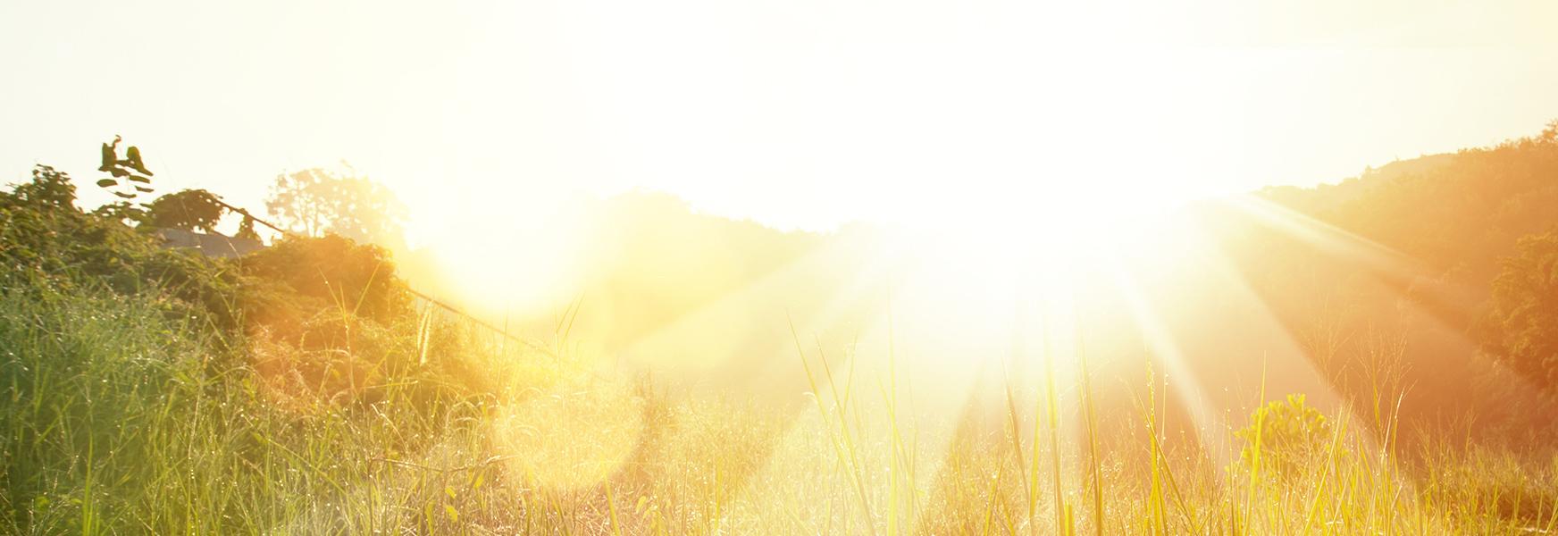 Sun shining over a grassy field