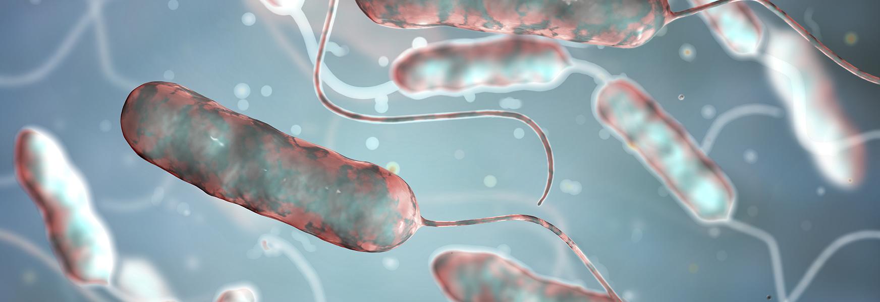 Legionnaires Disease Bacteria