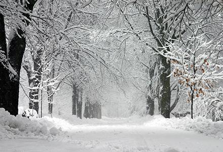 Fresh snow on trees and sidewalk