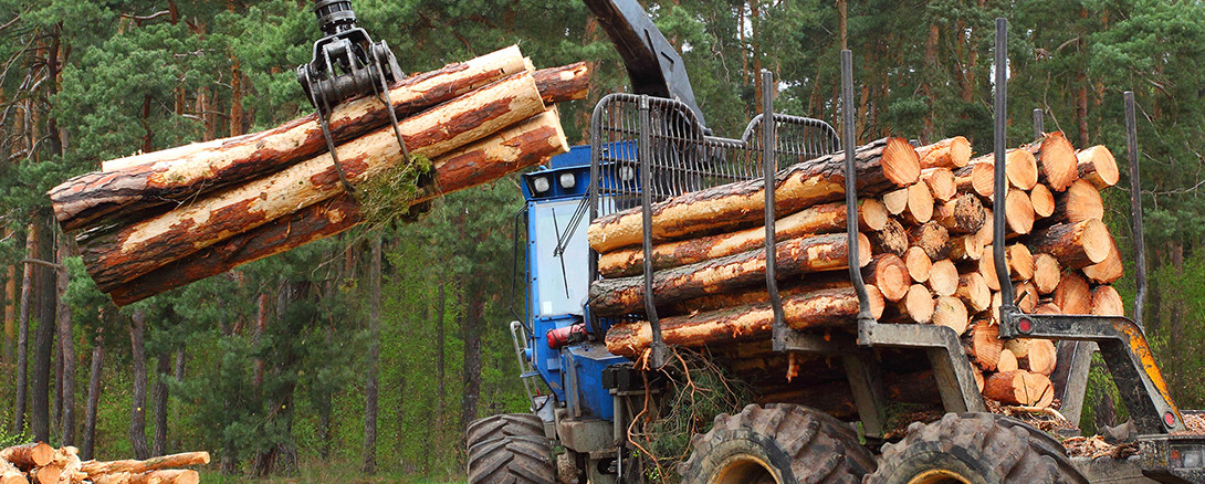 logs mechanically being moved