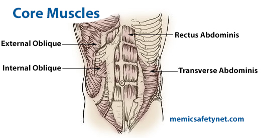 Diagram showing core muscles of the human body.